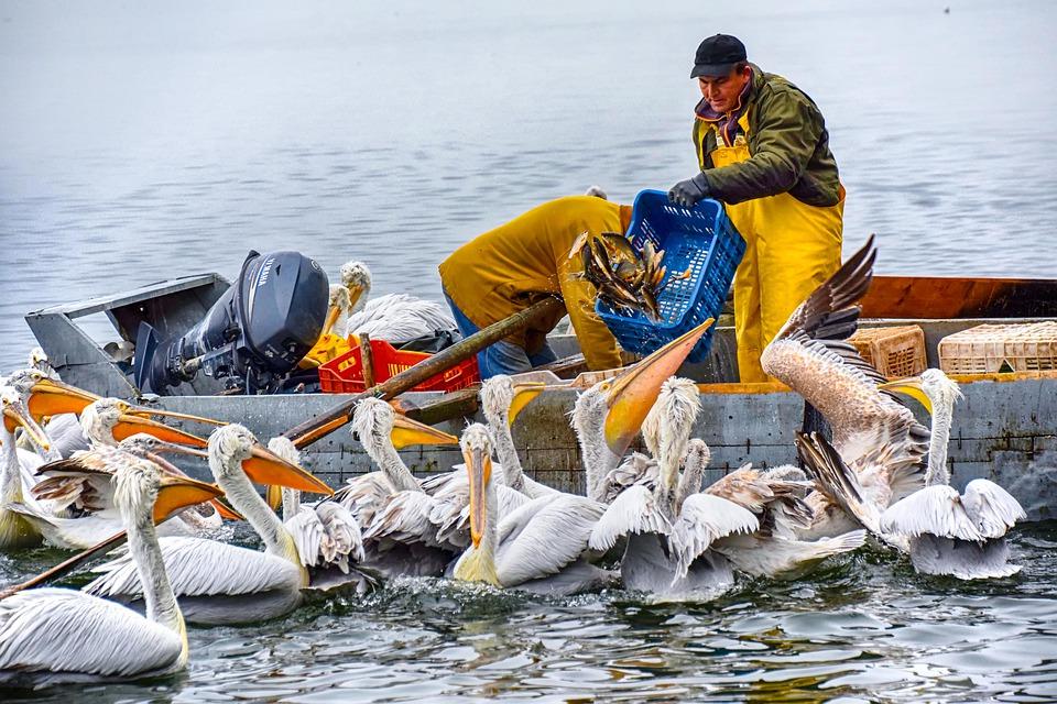 contratos laborales pescadores